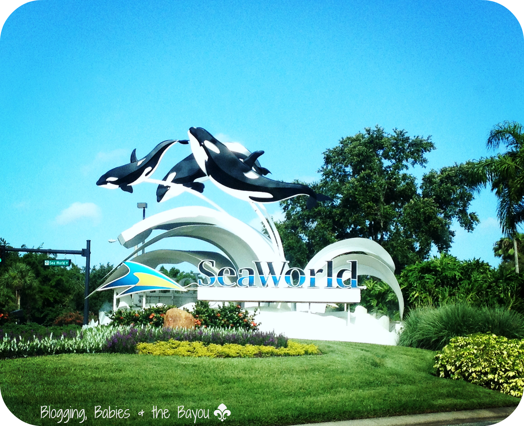 Sea World Orlando Florida  #VisitOrlando