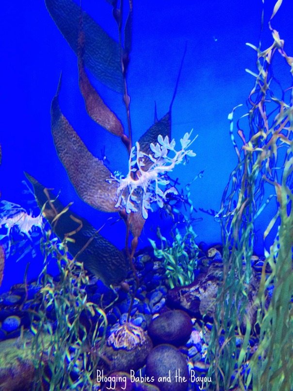 Ripley's Aquarium of the Smokies #BayouTravel